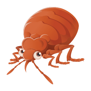 bed-bug-png